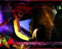 Locandina Lucciole & Lanterne